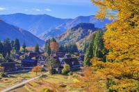 日本 富山県 紅葉の相倉合掌造り集落朝景