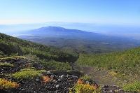 静岡県 富士宮五合目の富士山自然休養林ハイキングコースから見...