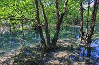 沖縄県 大見謝ロードパーク マングローブ林 西表島
