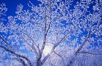 樹氷と朝日