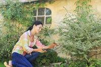 ガーデニングをする日本人女性