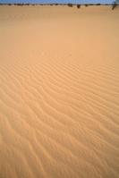スーダン ハルツーム近郊 サハラの風紋