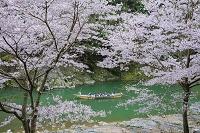 京都府 桜咲く保津川下り