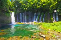 静岡県 新緑の白糸の滝