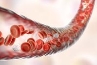 CG 赤血球と白血球