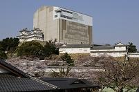 兵庫県 姫路城西の丸庭園から修復中の天守閣を見る