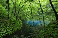 青森県 初夏の十二湖 青池