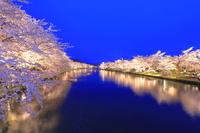 青森県 弘前城の桜のライトアップ