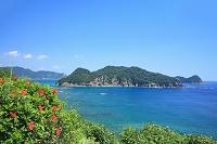 宮崎県 串間市 幸島とハイビスカス
