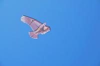 三重県 鳥除けのカイト