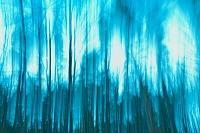 林のイメージ