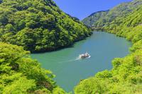 日本 富山県 新緑の庄川峡 庄川峡遊覧船