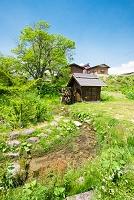 長野県 白馬村 大出公園 水車小屋