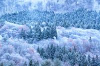 福島県 雪に覆われた山