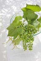 花瓶の中のブドウ