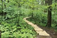長野県 赤沢自然休養林