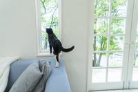 ソファに乗って窓辺から遠くを見る猫の後ろ姿