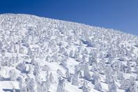 山形県 蔵王の樹氷