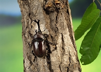 樹木とカブトムシ