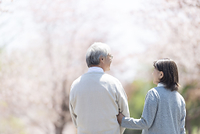 桜並木を散歩するシニア夫婦の後ろ姿
