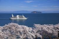 滋賀県 サクラと竹生島と花見船ビアンカ 琵琶湖