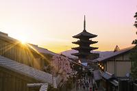 京都府 桜咲く夕暮れ時の八坂道と八坂の塔