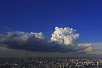 東京スカイツリー 入道雲