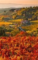 イタリア トスカーナ ブドウ畑