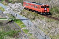 岡山県 津山線 キハ47系快速ことぶき(津山さくらまつりヘッドマ...