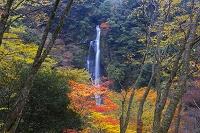 熊本県 せんだん轟の滝
