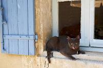 フランス セーニョン 窓辺の猫