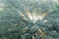 長野県 コナシと光芒