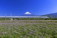静岡県 新幹線N700Aと富士山