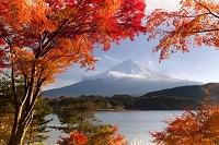 山梨県 河口湖々畔のもみじと富士山