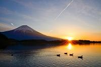 静岡県 田貫湖より富士山 日の出
