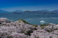 広島県 正福寺山公園の桜と瀬戸内海
