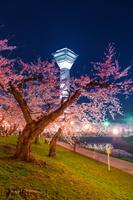函館 五稜郭タワーと夜桜