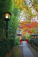 静岡県 竹林の小径
