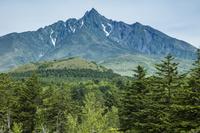 北海道 樹林と利尻岳