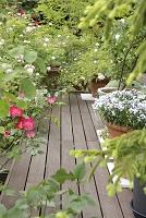 ガーデニング ウッドデッキのある庭