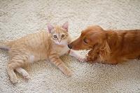仲良し猫と犬
