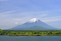 山梨県 新緑の精進湖より富士山