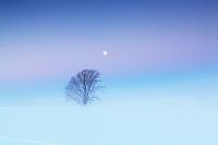 北海道 美瑛町 日の出前の霧とポプラ