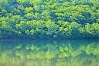 群馬県 赤城山の小沼