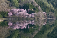 長野県 中綱湖