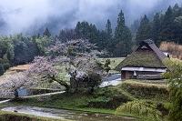 三重県 山霧漂う日本の里