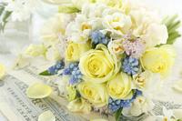 レモン色のバラとムスカリ