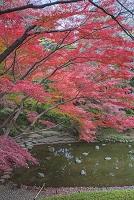 東京都 小石川後楽園 池と紅葉
