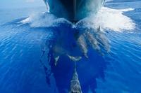 ボートの舳先を泳ぐハシナガイルカ