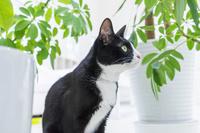 植物と見つめる猫